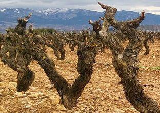 Posicionamiento web Rioja